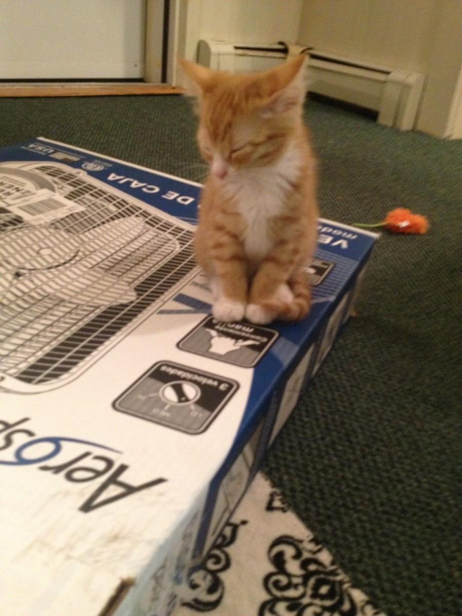I sleep on box.