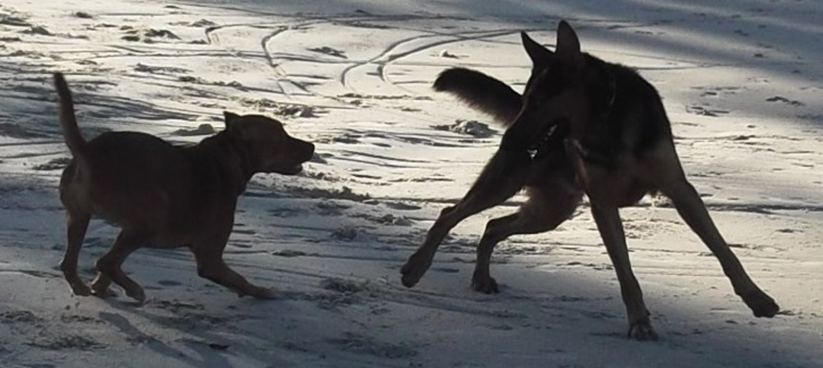 Every dog owner enjoys watching healthy dogs at play.