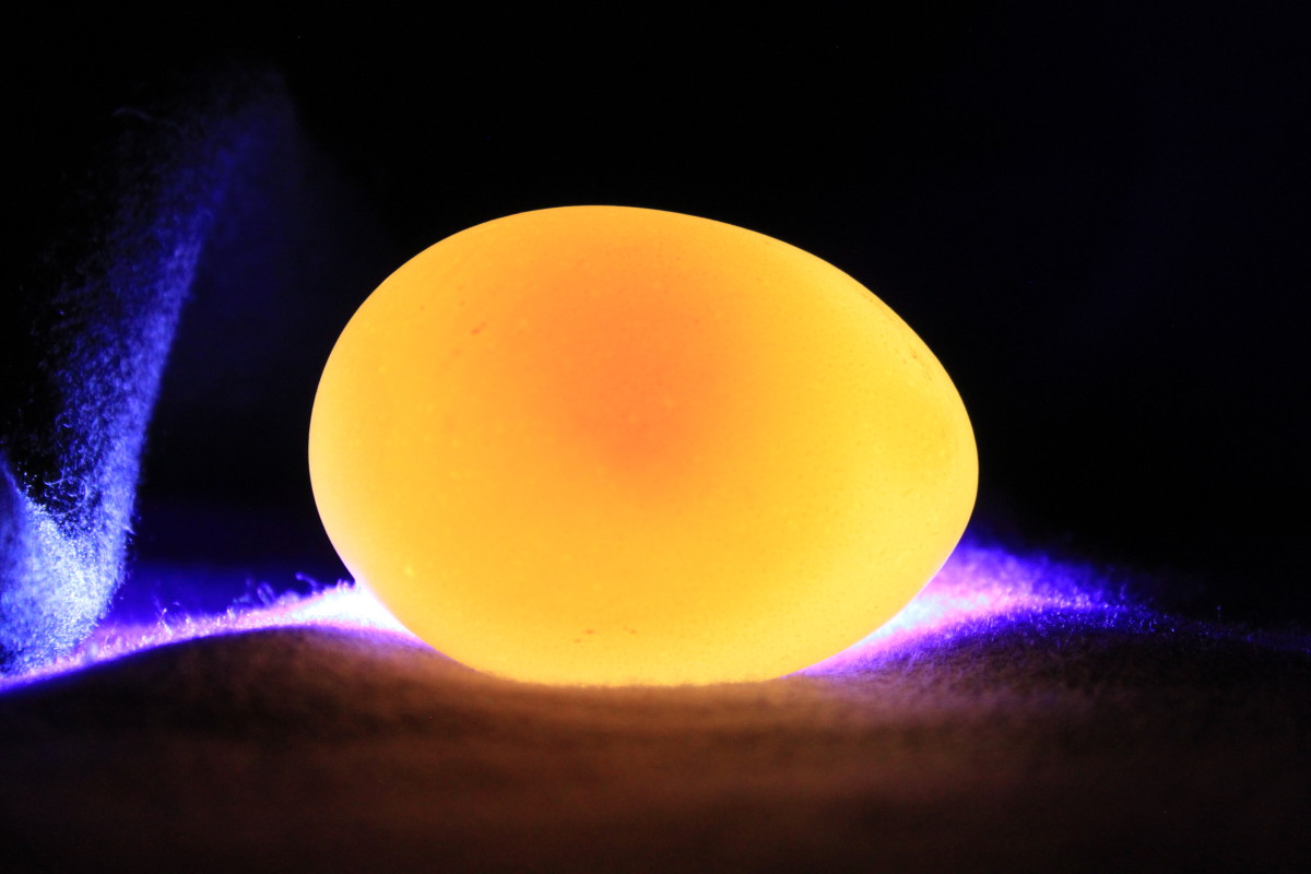 "An egg that does not develop at all is known as a ""clear"" or ""dud"".  When candled, the yolk shadow is barely distinctive, and there are no signs of development."