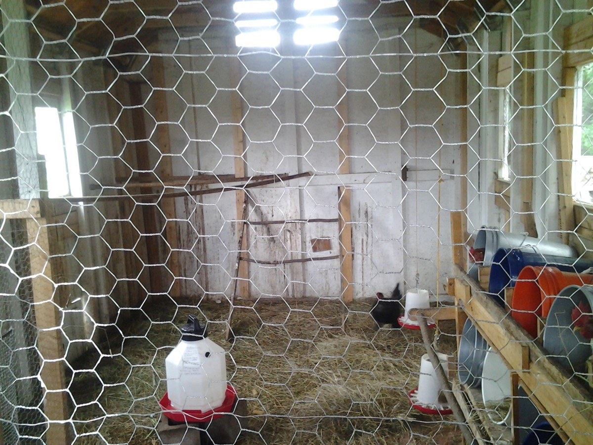 The inner chamber to our coop, where the chickens sleep, eat, and lay eggs.