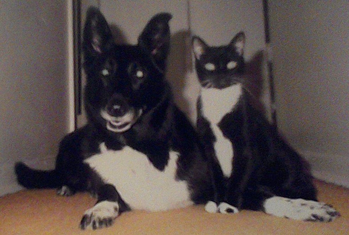 flea pills for cats and dogs