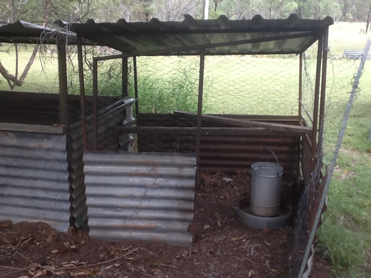 Chickens are usually moved to this coop after about three weeks of age.