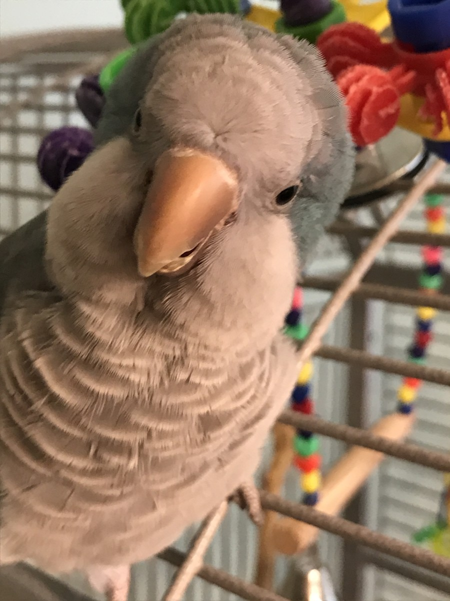 My parrot, Levi, is naturally curious.