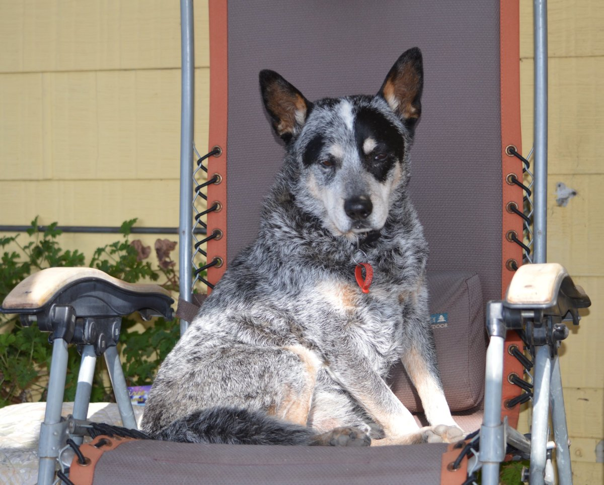Titan relaxing on a camp chair