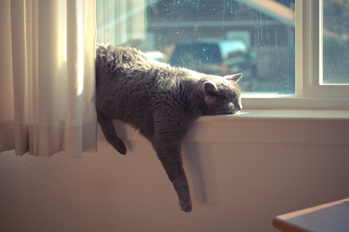 A windowsill is a good place to nap when you're a cat.