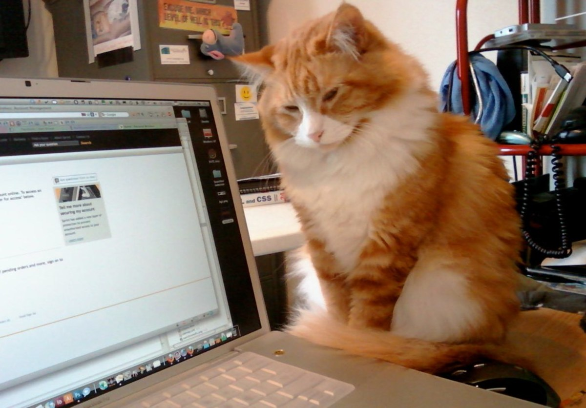 Geek cat monitors his human's internet use.