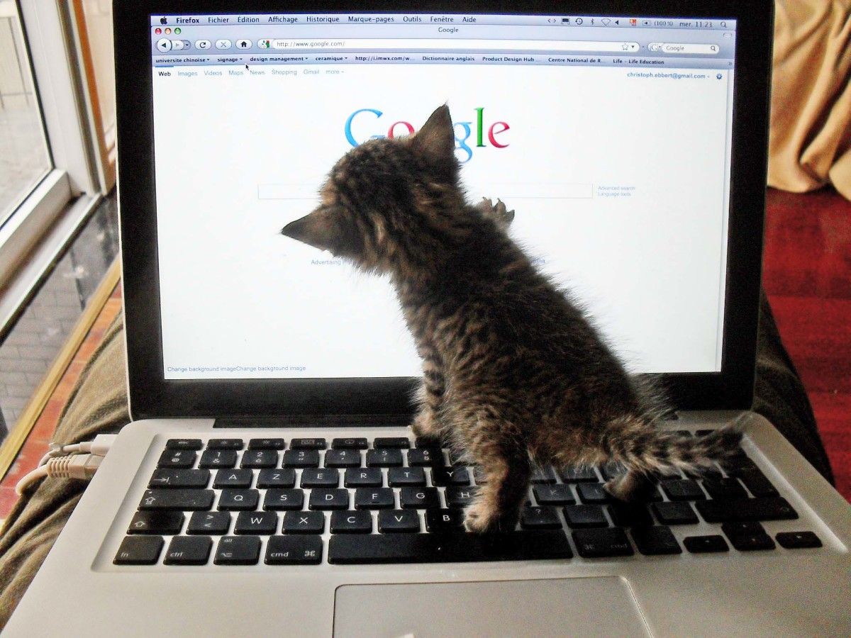 Kitten tries to google herself.