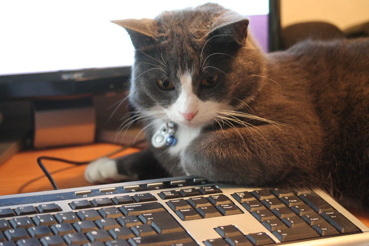 Computer geek cat