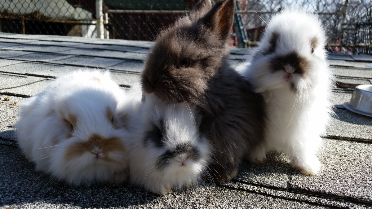Nothing more precious than baby lionheads! They are hard to resist!