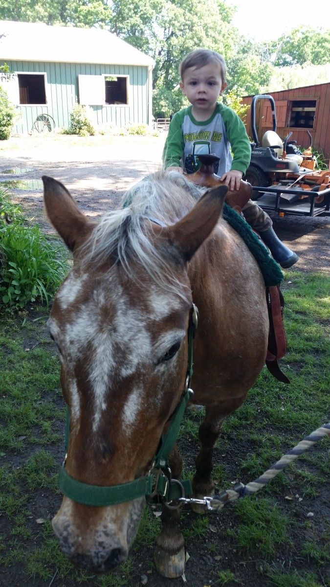 This is Peanut, a good pony ride pony of ours. He has his stubborn moments and needs a handler that isn't going to let him be the boss. He trailers great and is not spooky.