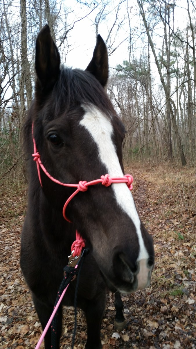 It took me a good long while with my persnickety mare, Zoe, doing ground work before I gained her respect. She thought she knew better than me for quite some time.