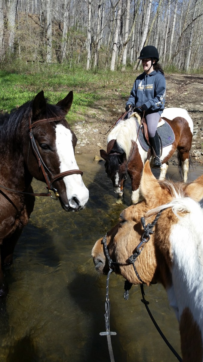 We all need our horses to be balanced. Whether it be for ring work, or for things like trail riding, the picture doesn't do it justice, but we had a steep little walk down into the river in this picture.
