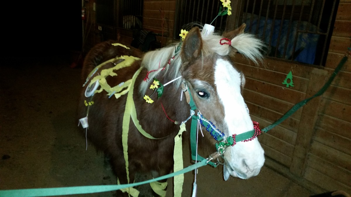 Here's one for ya, PETA. This is Huey, the best and most wonderful pony ride pony to ever walk the earth. He is in horsey heaven now. He loved any attention he could get, including pony decorating contests.