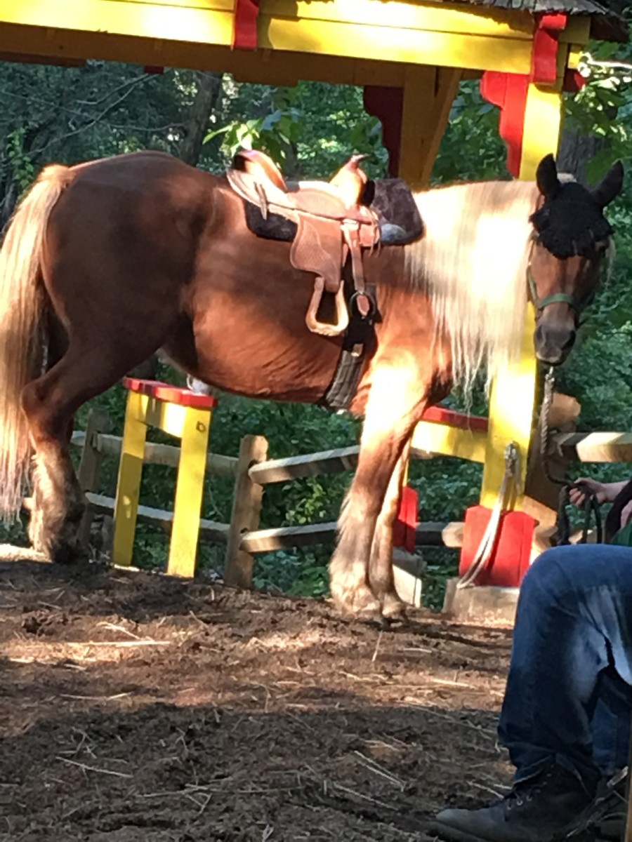 Why Pony Rides Are Not Animal Cruelty: A Horse Trainer's Opinion