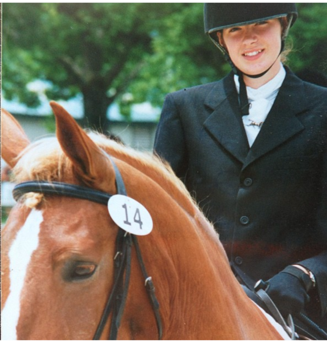 My first horse was a Belgian/ TB cross.