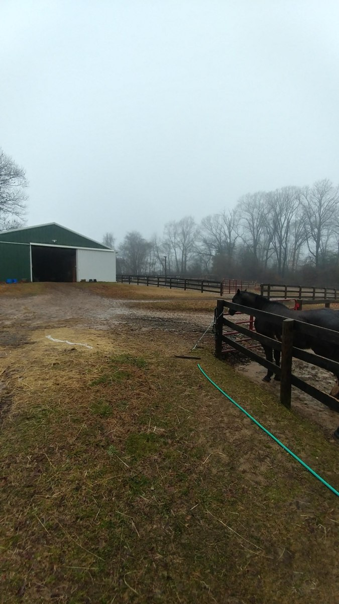 Rainy and stormy day leaves us stuck in the barn for unmounted horsemanship lessons on days like today.