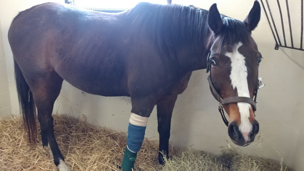 It is hard to think of our horses anywhere besides with us when they are hurt or sick. Sometimes as hard as it may be, it is for the best.