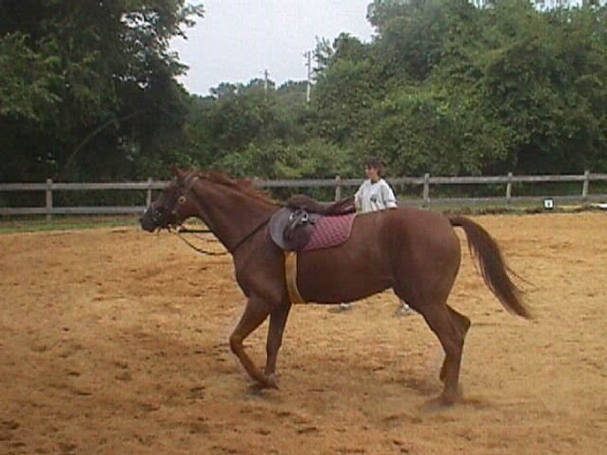 Zelda was a registered Oldenburg. She was less expensive than a lot of my other horses because she was not broke to ride when I got her.