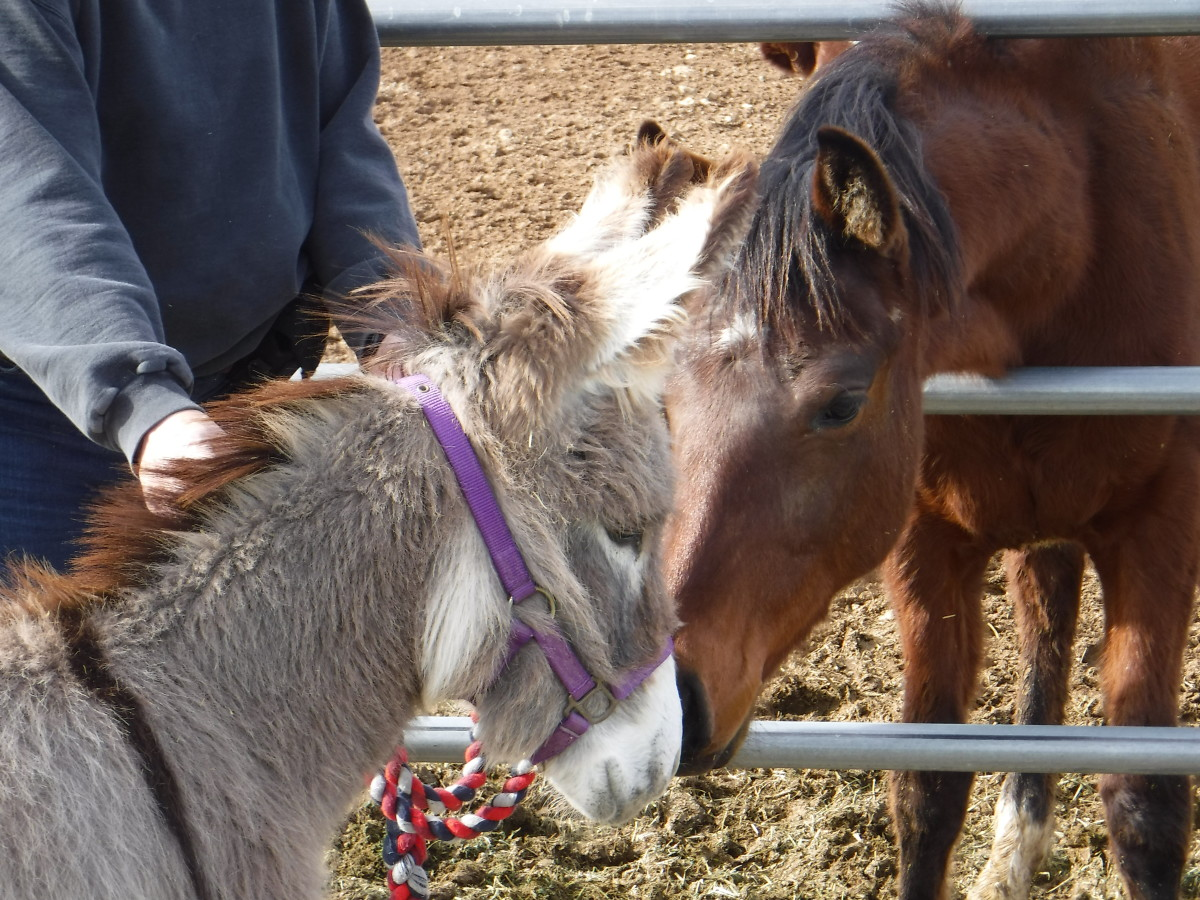 Odelia meets Julie, the youngest horse on the ranch, for the first time.