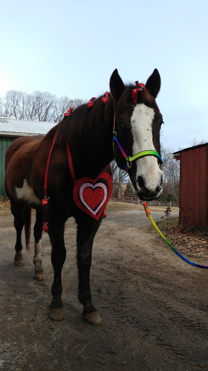 Romeo seems like an appropriate photo model for the month of February!