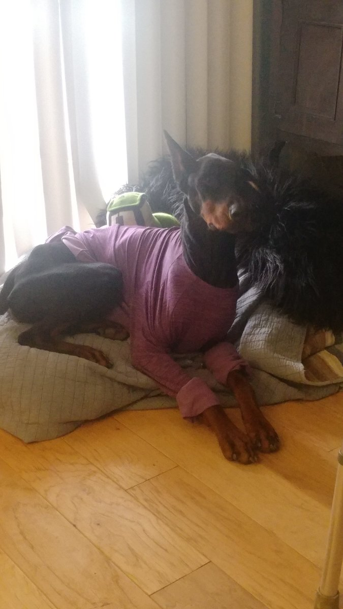 This is my pretty Doberman girl Zegna, we just lost her at only 3 years old a few weeks ago. They really do take pieces of your heart with you when they go!