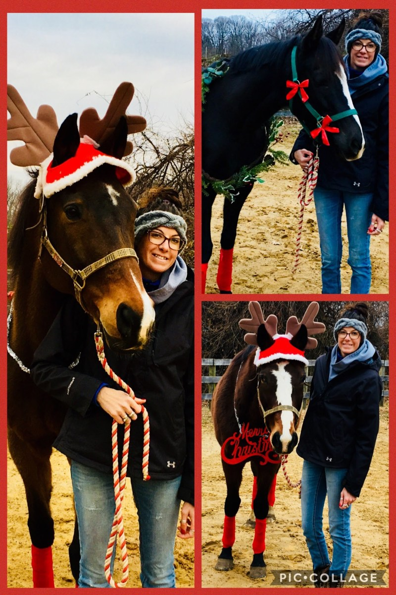 I used the pic collage app to make my card, since actually having all three of my horses in one picture just wasn't going to happen!