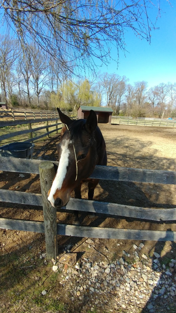Find out if the horse is used to being on grass,or standing in a paddock eating off a hay round. Both things are just fine, it is just a matter of knowing what the horse is used to and how to transition to his new home.