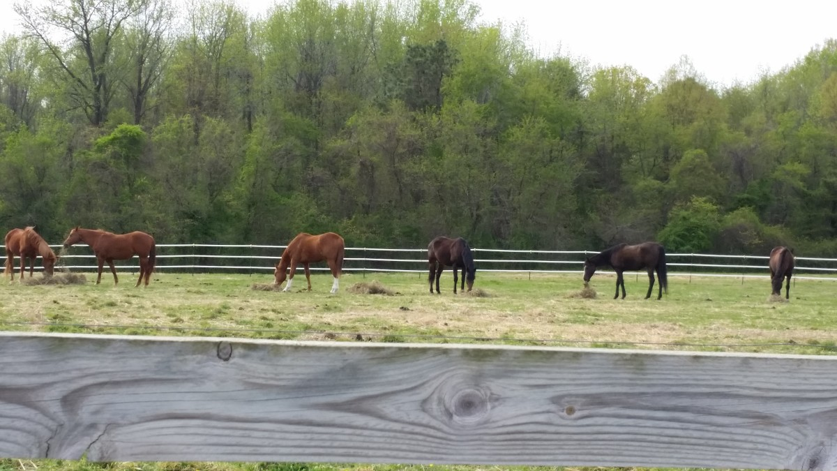 Discuss what the horses turn out schedule has been and will be at your farm.