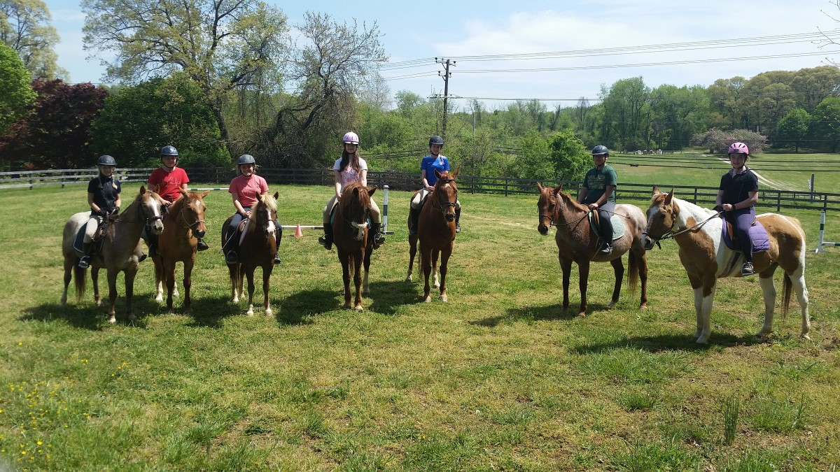 Look at those good looking school horses and helmet wearing students!