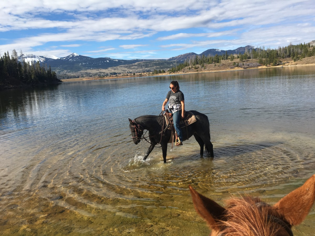 how-becoming-a-horse-wrangler-helped-my-horsemanship