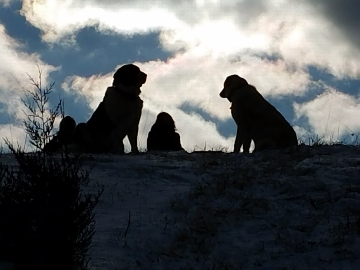 Guarding the kids while they are sledding.