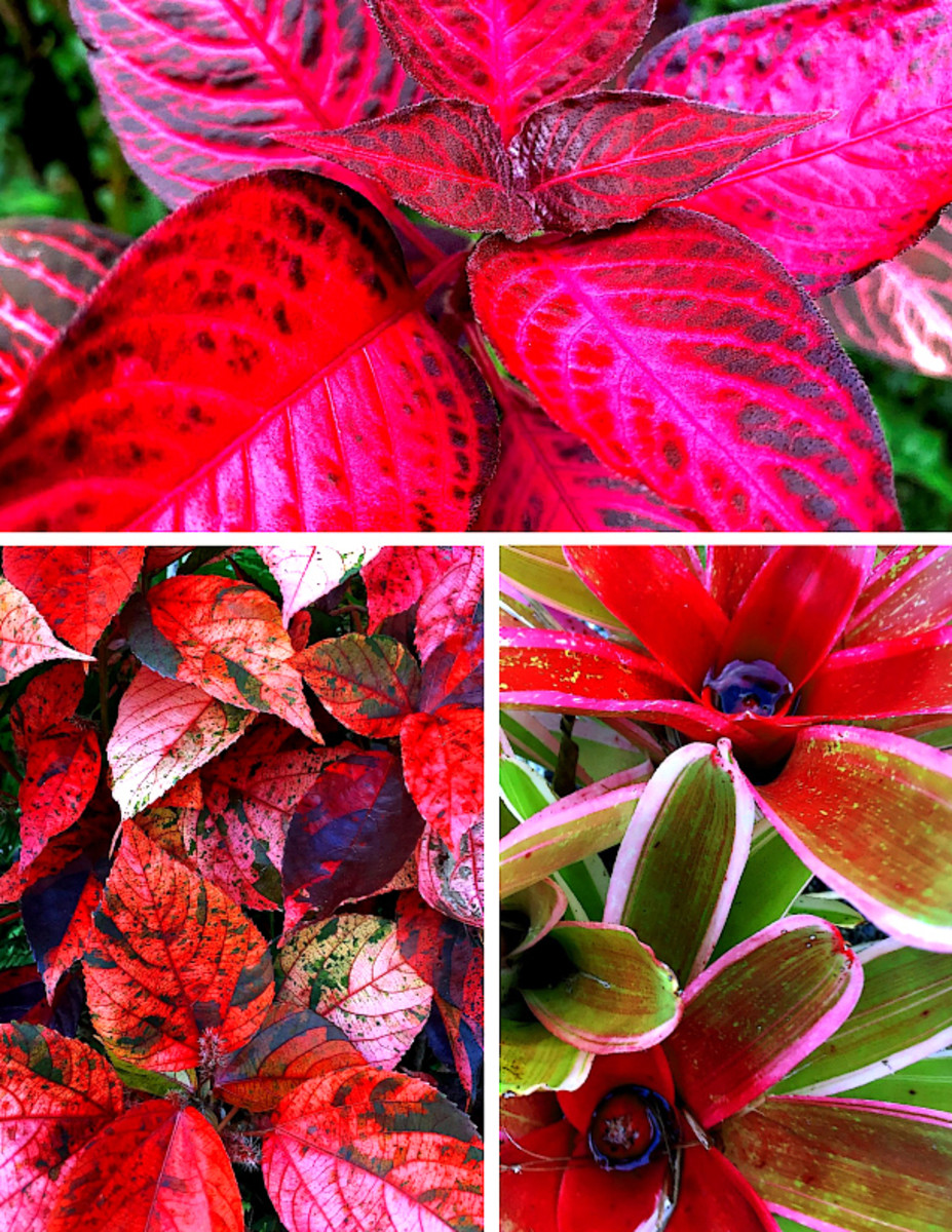 10 Spectacular Red Foliage Tropical Plants for Your Garden