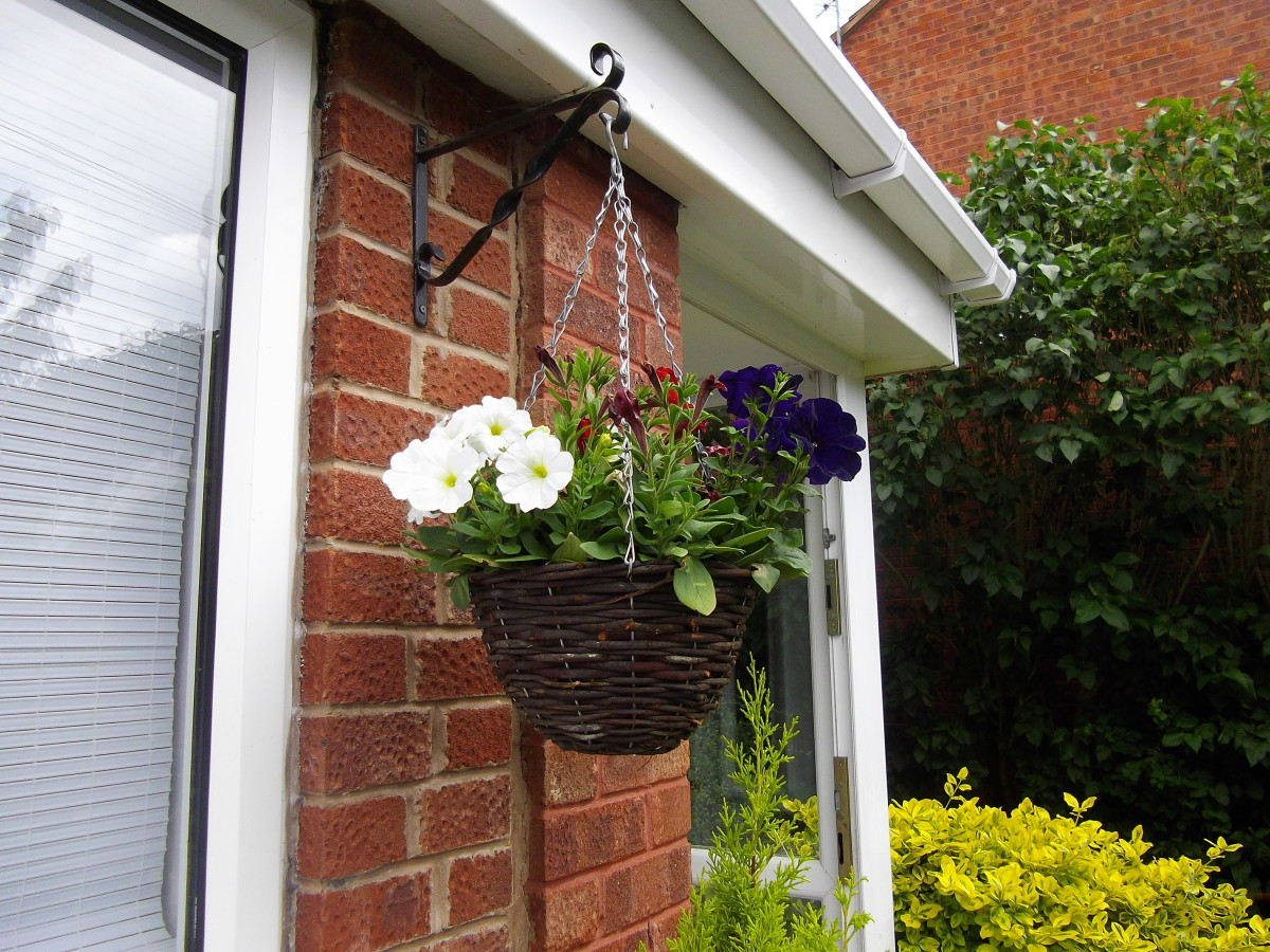 Hanging basket filled with flowers.