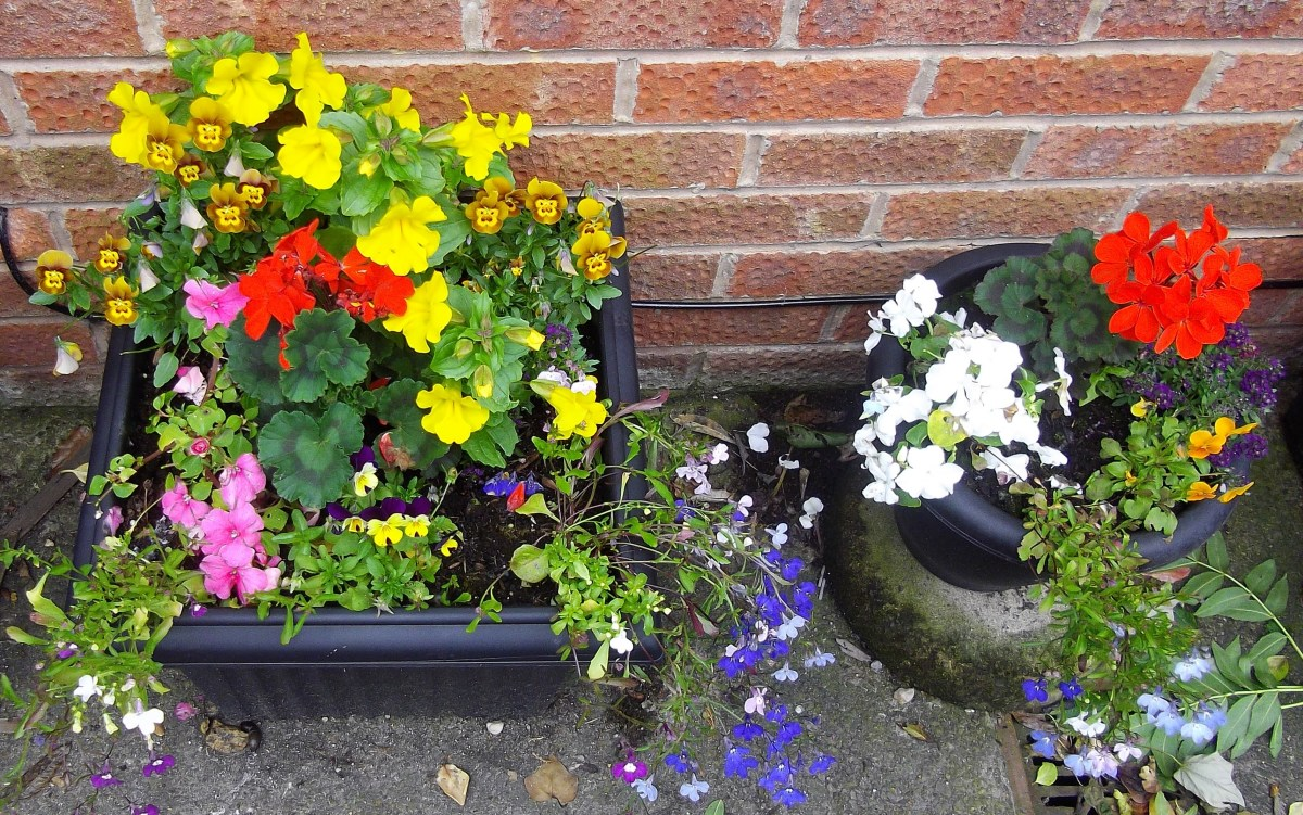 Pots and baskets of flowers outside the front door are always welcoming.