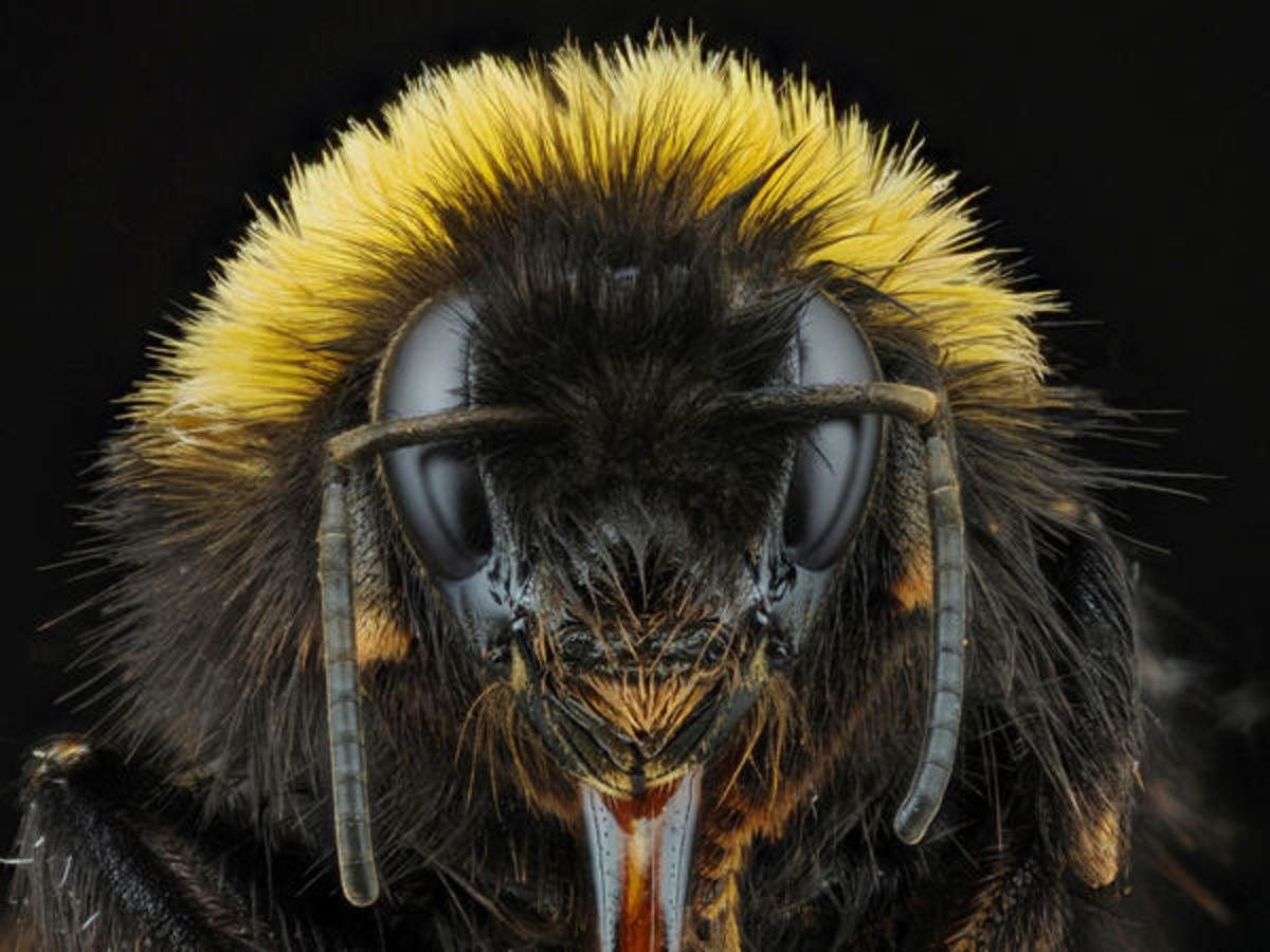 In the Queen Bee Syndrome, a female in a supervisory or management position treats female subordinates more critically.