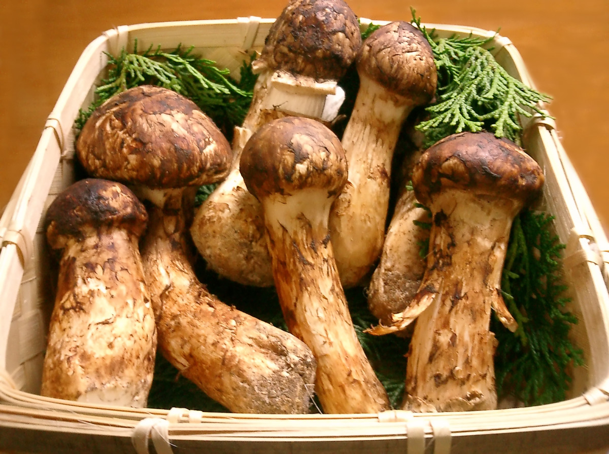 The rare, the Matsutake mushroom, or mattake, is expensive at $1,000 per pound.