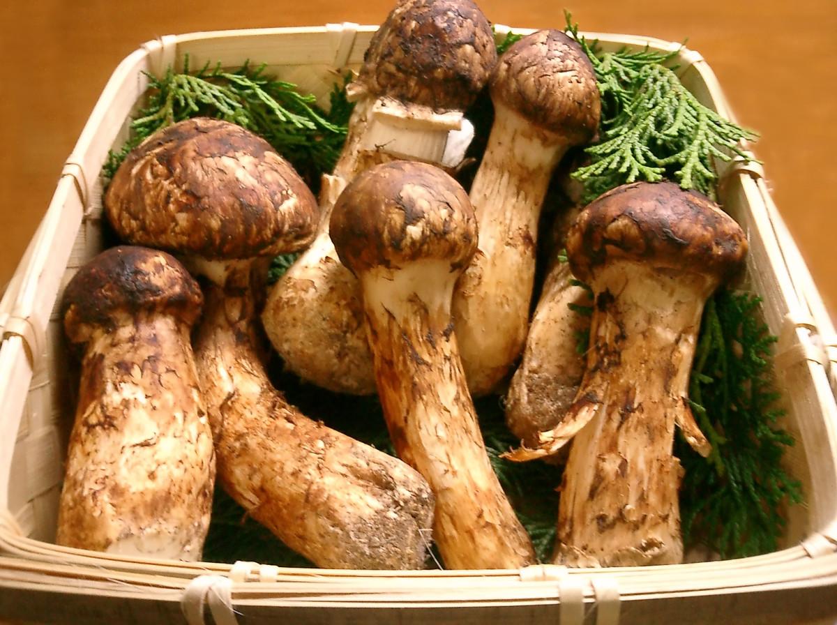 The rare, the Matsutake mushroom, or mattake, is expensive at $1,000 per pound.