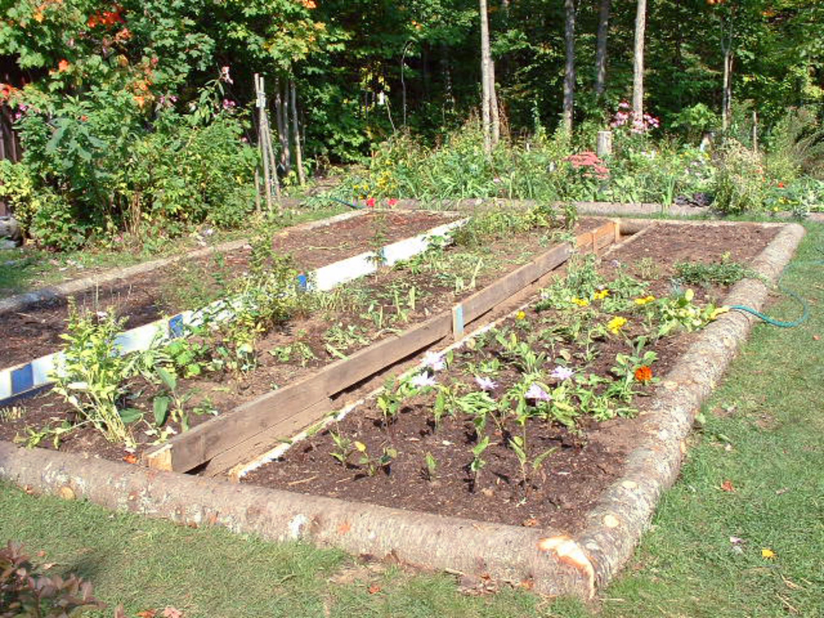 A home garden can provide healthy and tasty vegetables and can save on your grocery bill