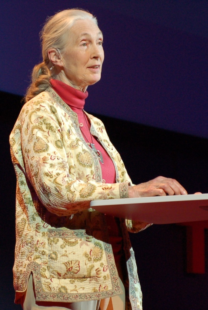 Jane Goodall giving a TED Global talk  in 2007