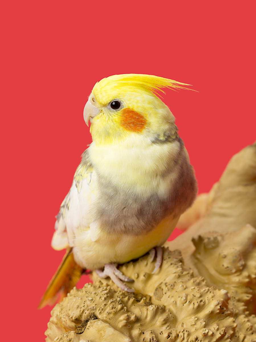 "Does your store offer birds? Make that clear in the name with bird-related words like ""feathers,"" ""tweet,"" and more."