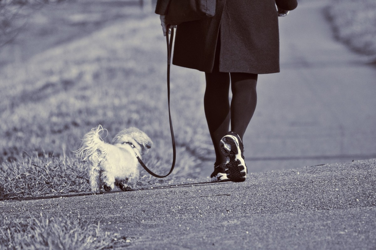 Dog walking is on the rise as a part-time way to earn money