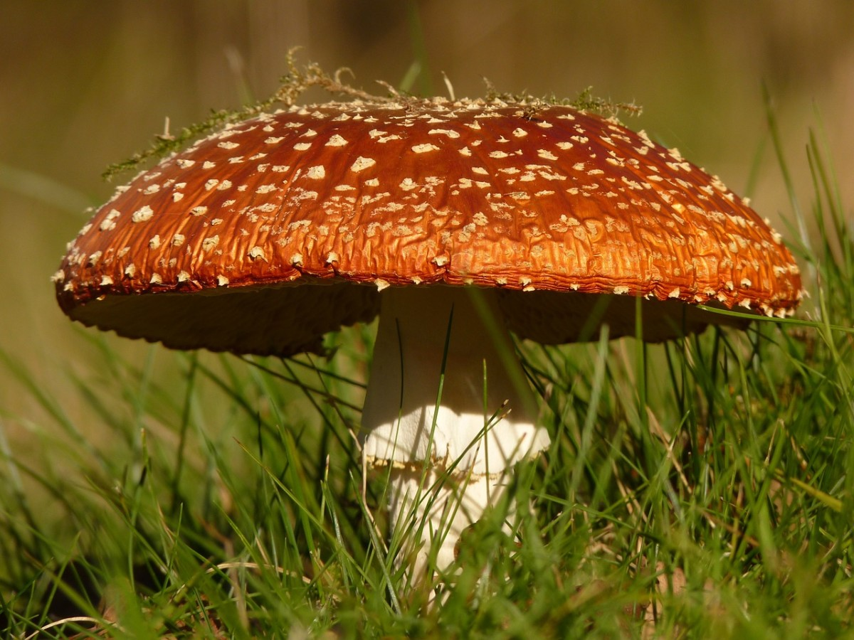 Do you know how to identify poisonous mushrooms? You could turn that into a good article!