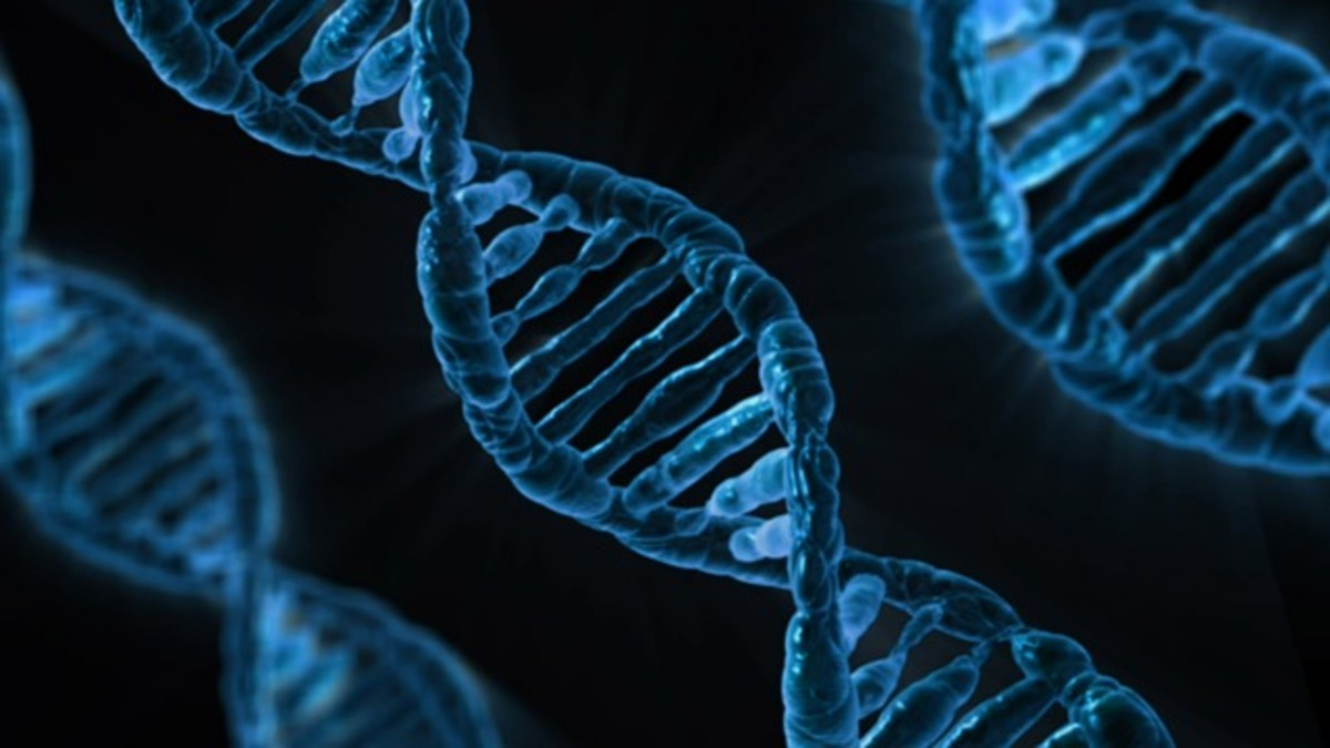 DNA offers increasing amounts of evidence.