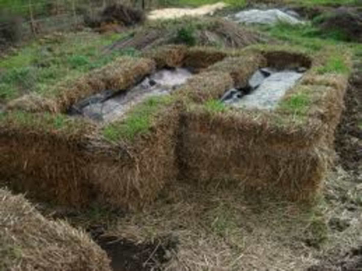 Above-ground worm beds insulated with hay bales to protect worms from extreme weather.