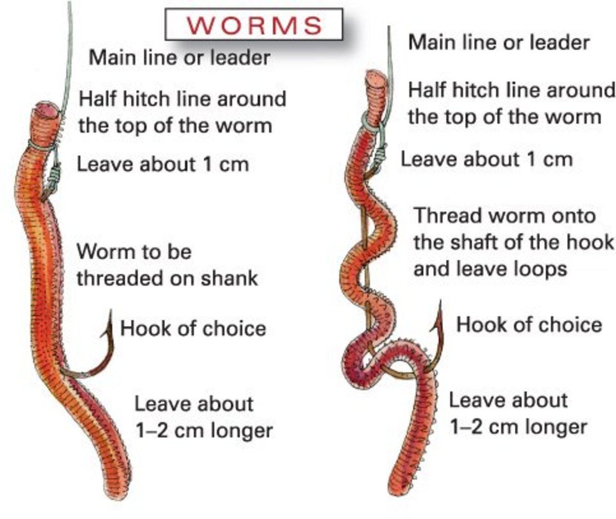 How to raise earthworms for easy money toughnickel for Red worms for fishing