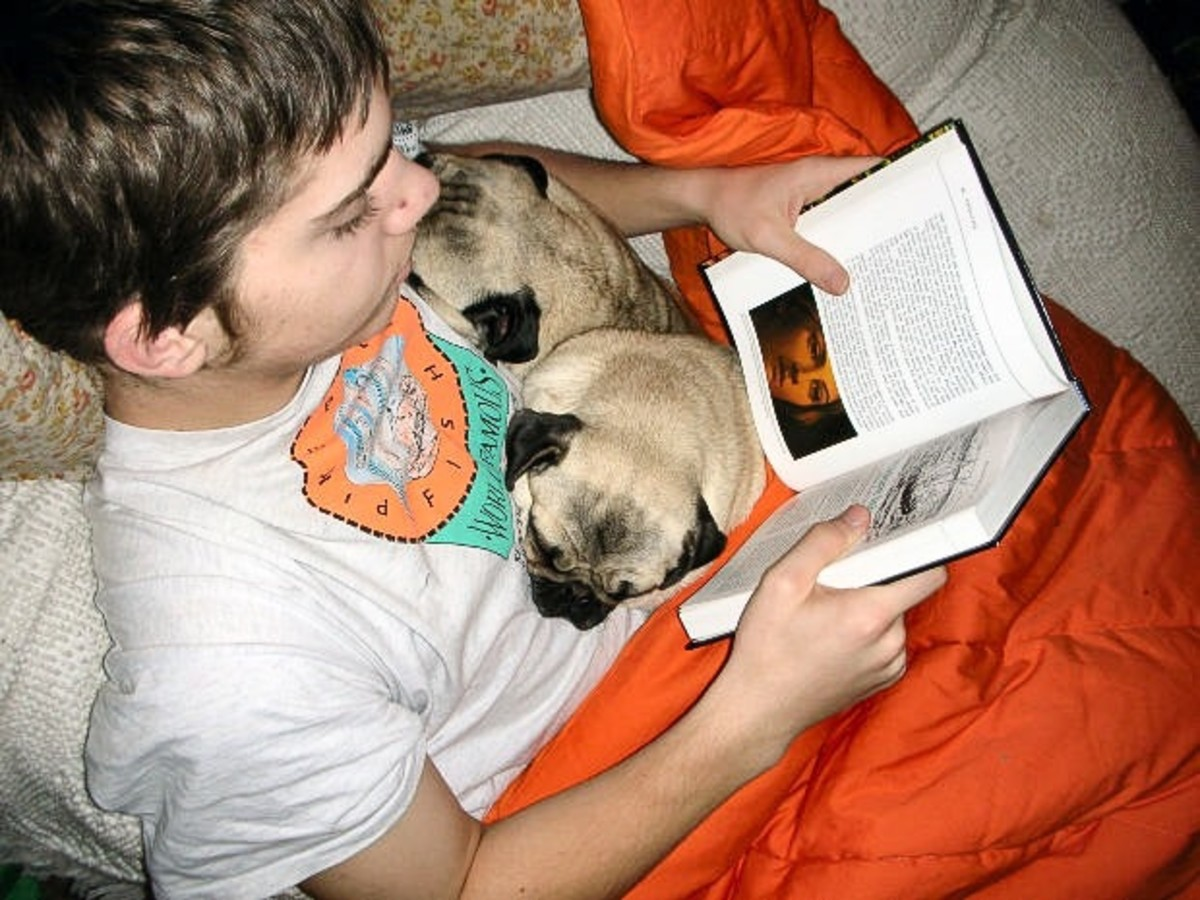 Reading with pugs