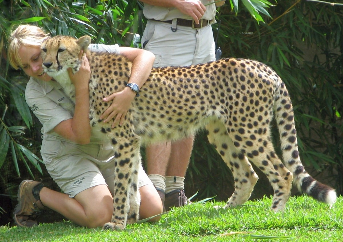 Becoming a Zookeeper: Zookeeper Salary and Duties
