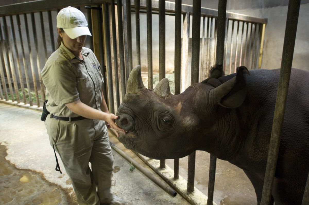 Becoming a Zookeeper: Salary and Duties