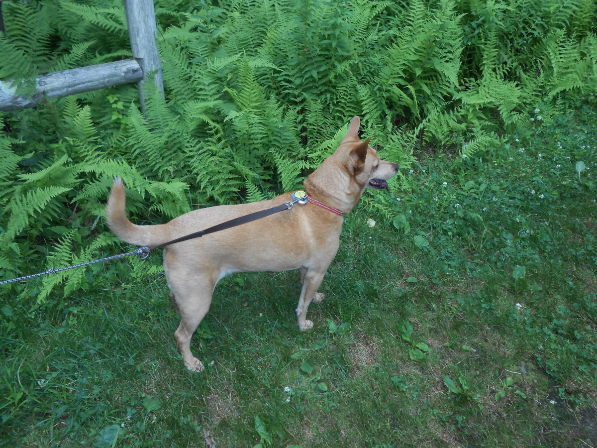 A dog can make a great companion on a walk if he's already with you in your car. Don't miss a chance for a wonderful walk as youa re driving by a park or nature trail.