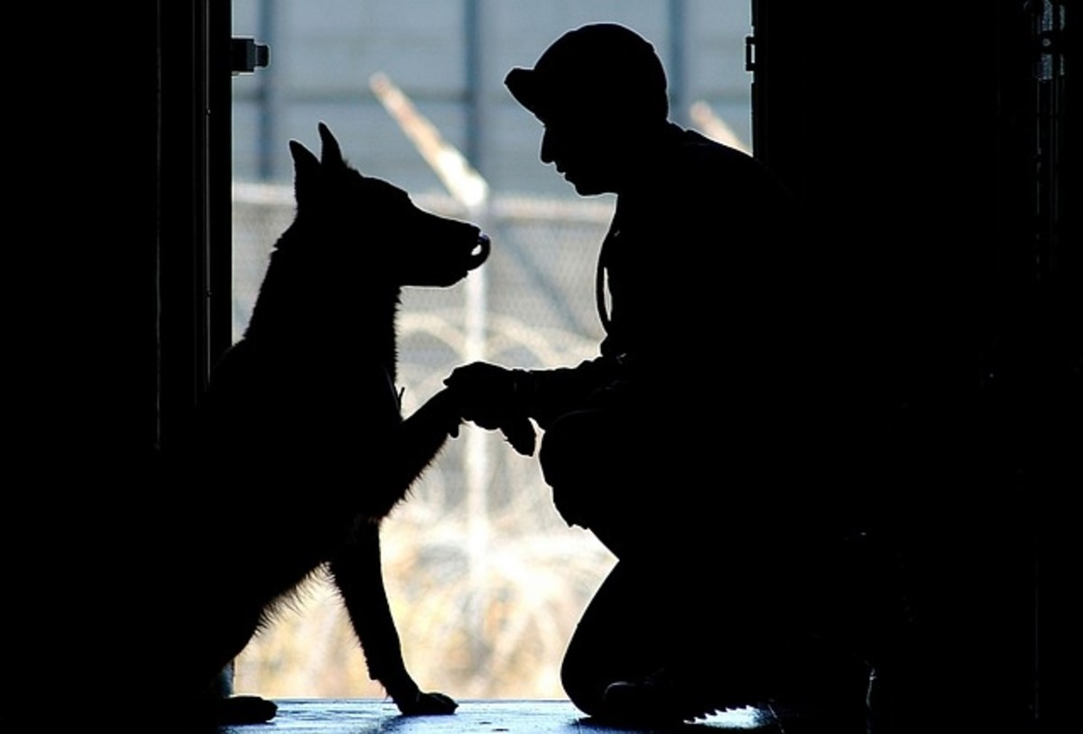 A Veteran and working dog.